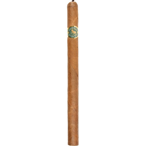 Casdagli Daughters of the Wind Cremello Lancero